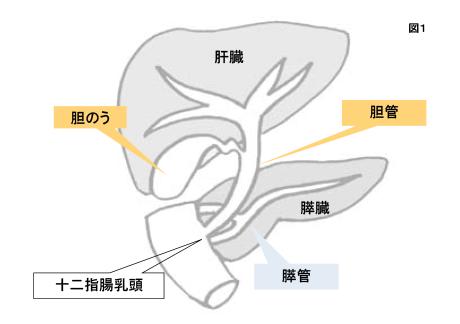 胆石症の症状、治療、手術について|守口敬仁会病院